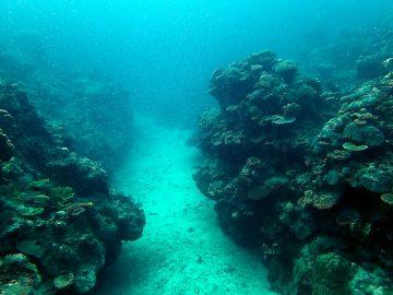 Plongée le 14 février 2017 au Grand Coude à Bourail