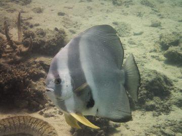 Plongée le 8 mars 2020 à Tepava