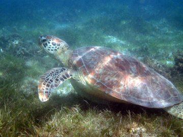 PMT le 25 mars 2017 à l'îlot Maître