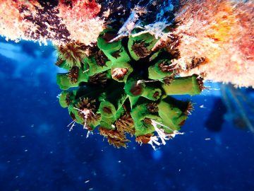 Plongée sur le Toho 5 le 22 mai 2020