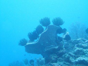 Plongée le 15 juin 2019 à l'îlot Nouaré à Yaté