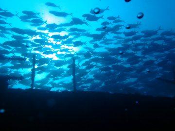 Plongée le 22 juillet 2017 sur l'Épave du Toho II en face du Méridien à Nouméa