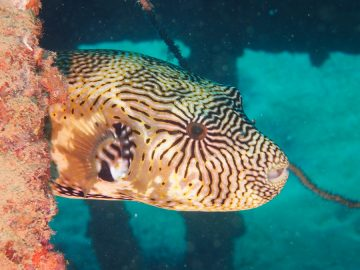 Plongée le 25 juillet 2020 sur le Toho 2