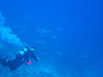 Plongée le 27 juillet 2019 sur la corne d'Isié à la Foa