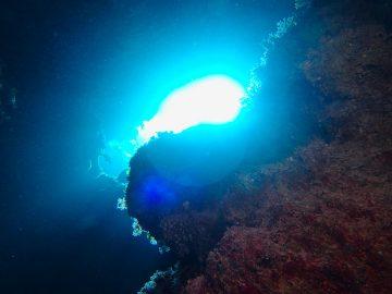 Plongée le 19 août 2019 à Nu-Trehle à Lifou