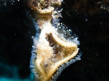 Plongée près du récif Kuta dans le lagon sud le 21 août 2021