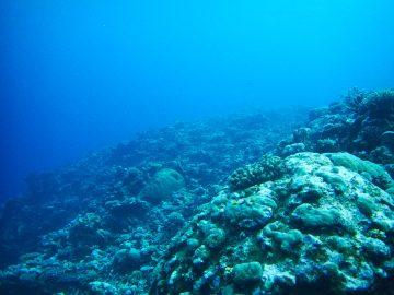 Plongée le 15 septembre 2019 au spot aux surfeurs