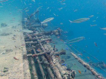 Plongée le 25 octobre 2020 sur le Humboldt