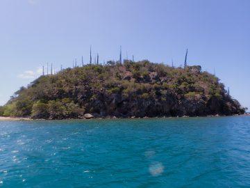 Plongée près de l'îlot Porc-Epic au Mont-Dore