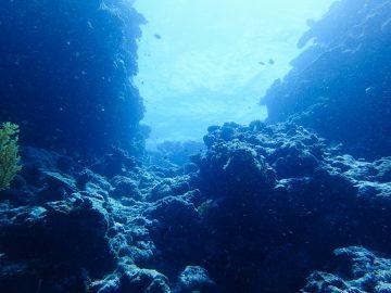 Plongée le 20 novembre 2020 à Grand Canyon à l'Île des Pins