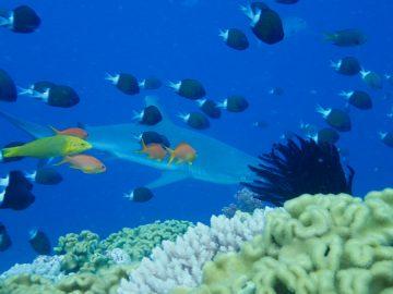 Plongée le 21 novembre 2020 au Jardin d'Eden à l'Île des Pins