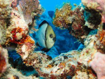 Plongées le 7 décembre 2019 près de l'îlot Surprise aux Récifs d'Entrecasteaux