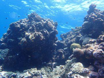 Campagne photo aux récifs d'Entrecasteaux en décembre 2019