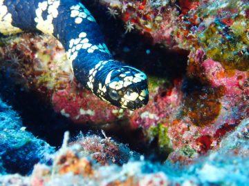 Plongées le 14 décembre 2019 dans l'atoll Huon aux Récifs d'Entrecasteaux