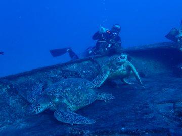 Plongée le 26 décembre 2018 sur les épaves YO-257 et San Pedro à Hawai'i