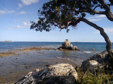 Plongée le 25 juin 2020 au rocher à la voile à Nouméa